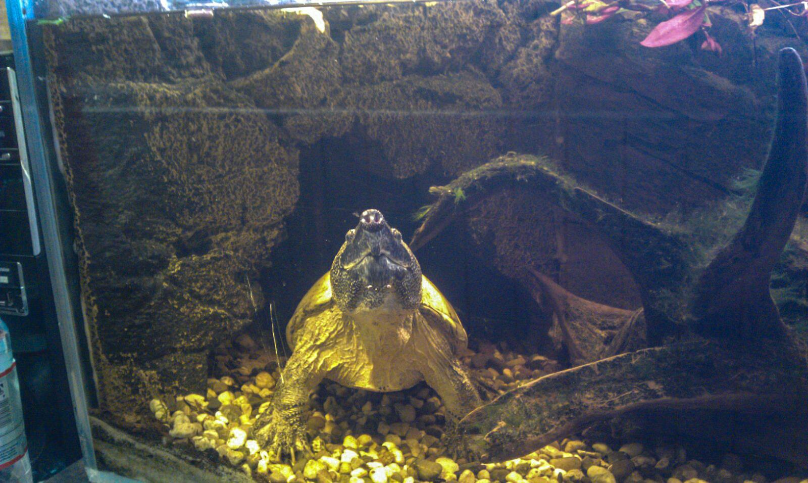 Die Schildkröte Günther.